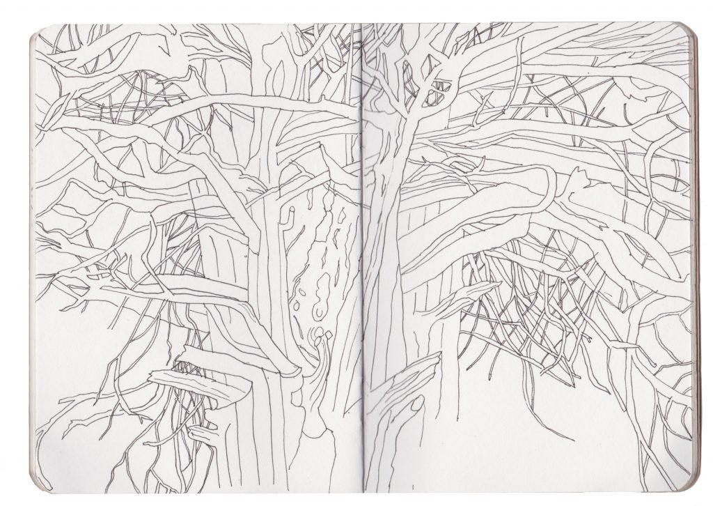 Yew Tree Drawing AMC