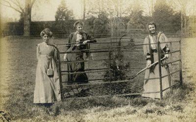 The Suffragette Arboretum, Batheaston