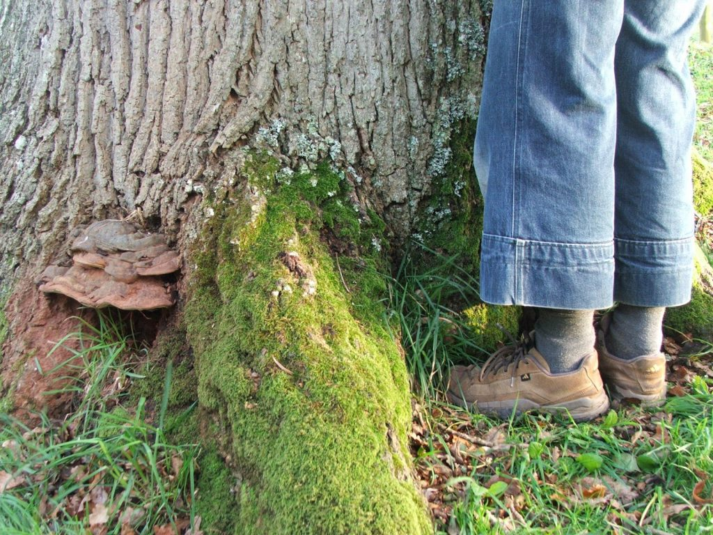 At the foot of the oak