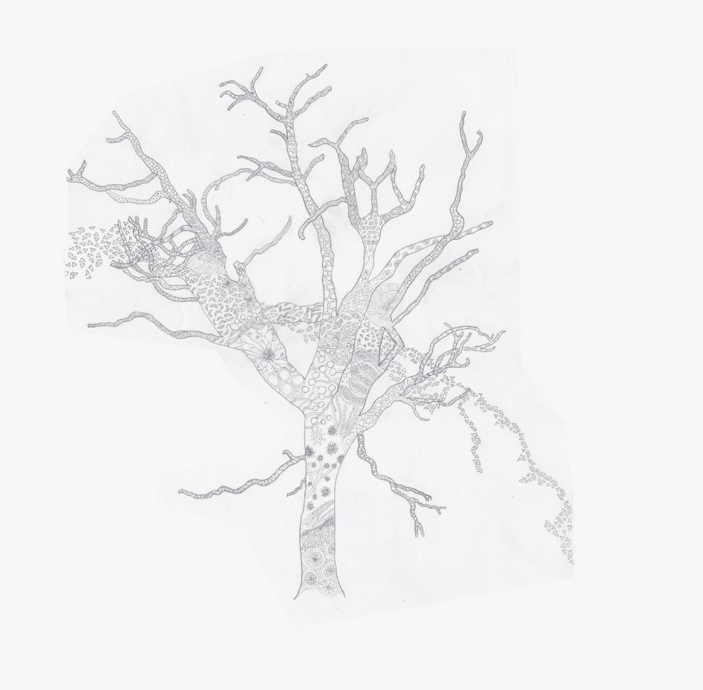 fungalroots - AMC